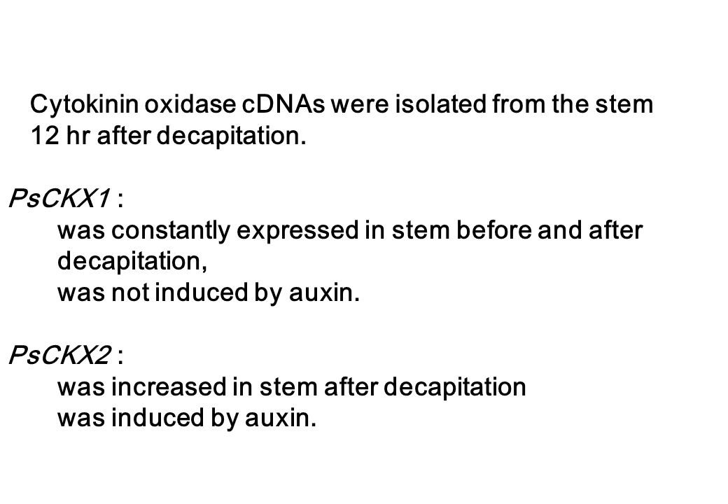 Cytokinin oxidase cDNAs were isolated from the stem 12 hr after decapitation.