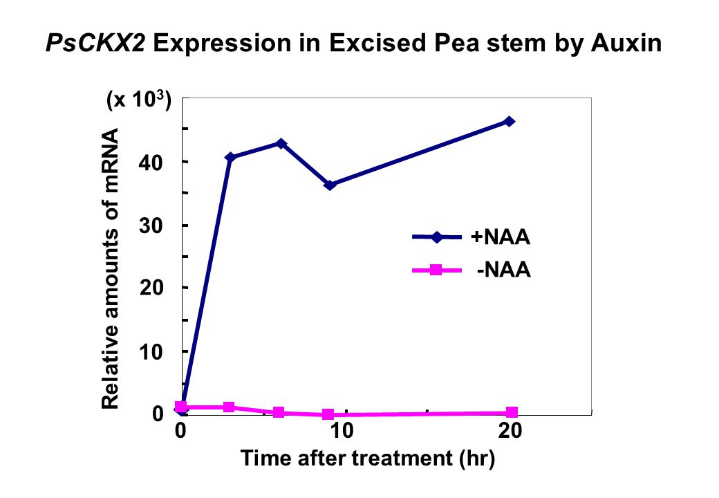 PsCKX2 Expression in Excised Pea stem by Auxin