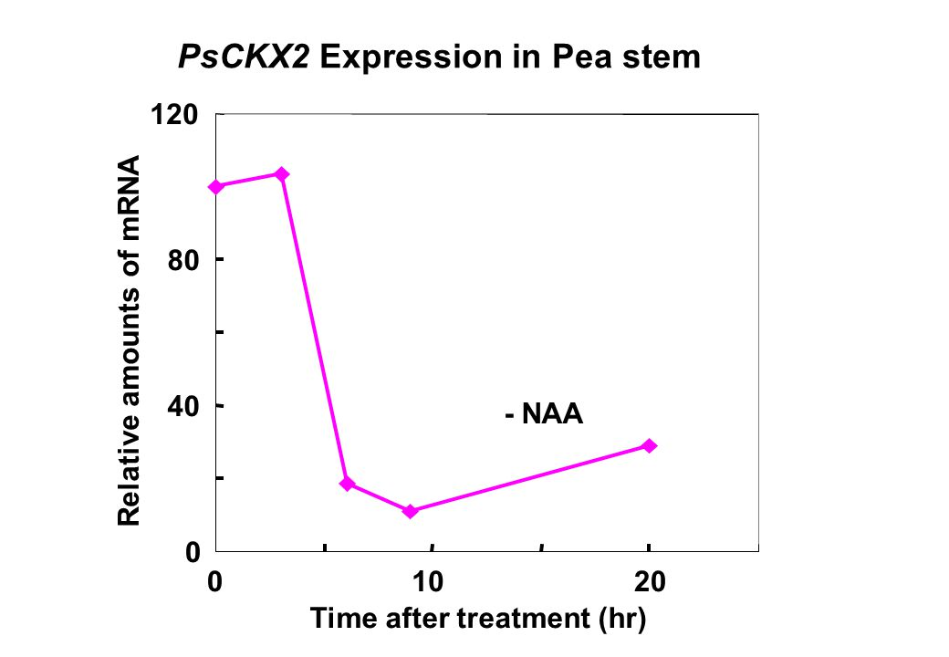 PsCKX2 Expression in Pea stem