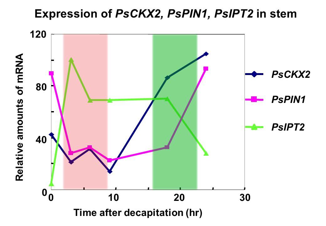 Expression of PsCKX2, PsPIN1, PsIPT2 in stem