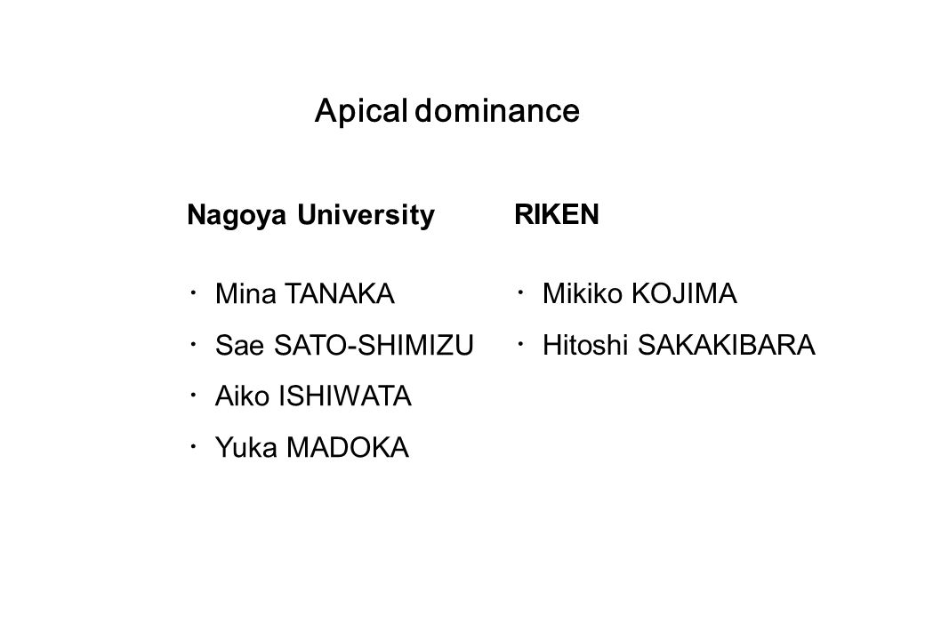 Apical dominance Nagoya University ・Mina TANAKA ・Sae SATO-SHIMIZU