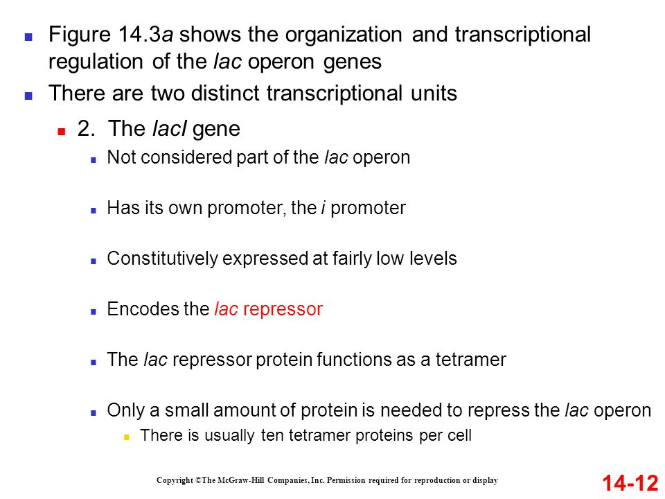 There are two distinct transcriptional units