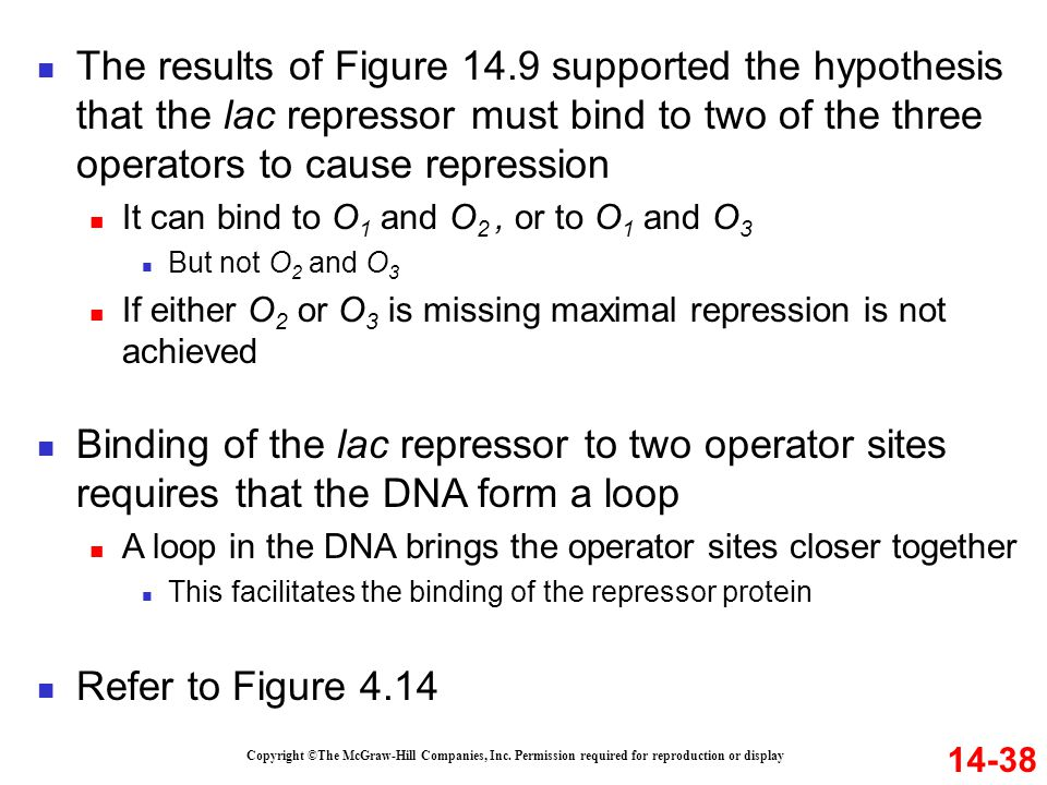 The results of Figure 14.9 supported the hypothesis that the lac repressor must bind to two of the three operators to cause repression