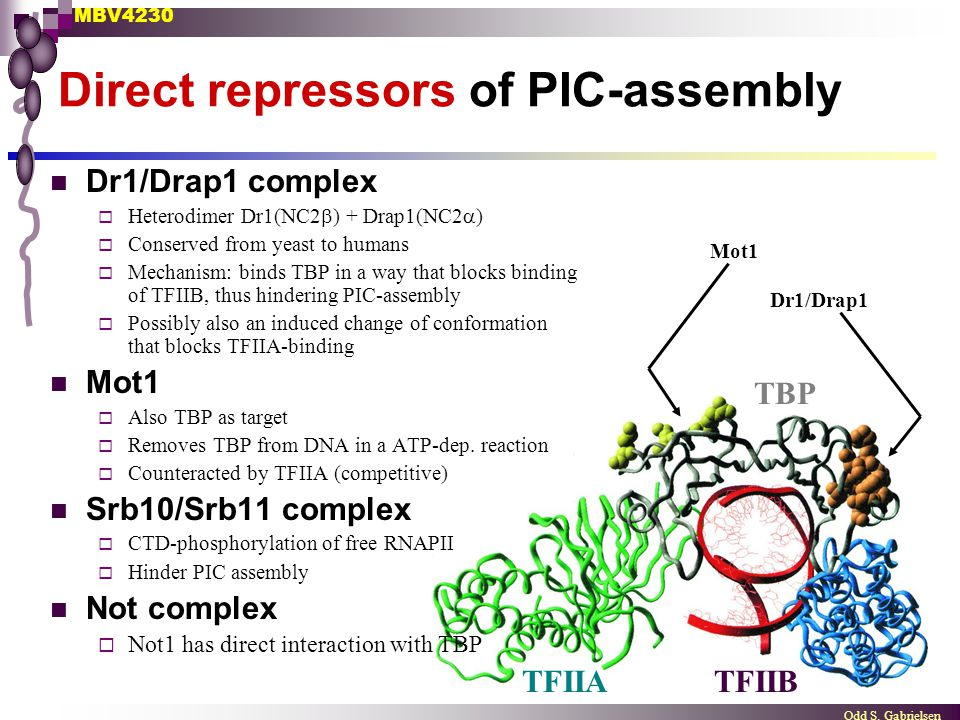 Direct repressors of PIC-assembly