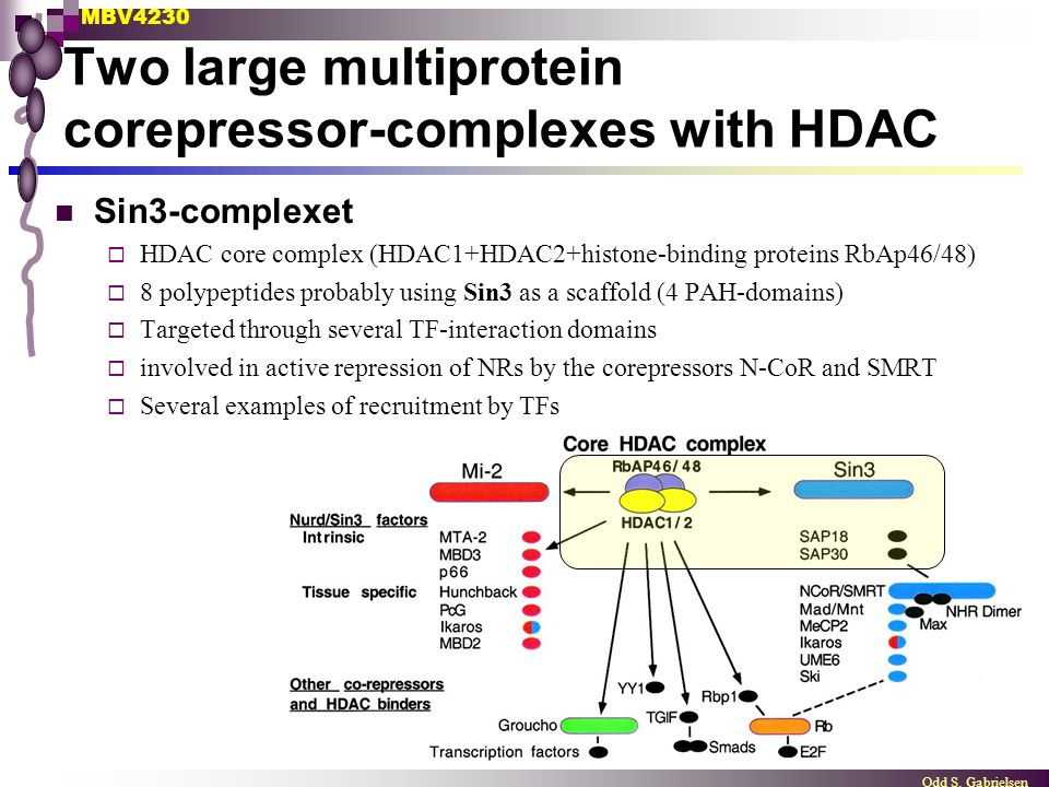Two large multiprotein corepressor-complexes with HDAC