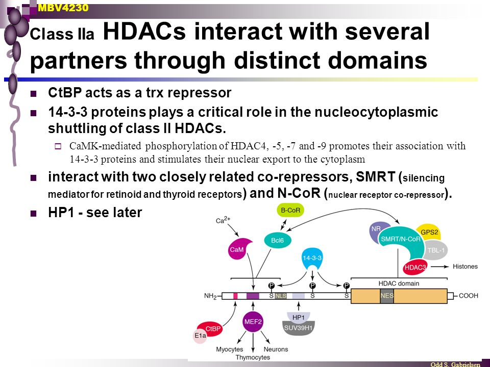 Class IIa HDACs interact with several partners through distinct domains