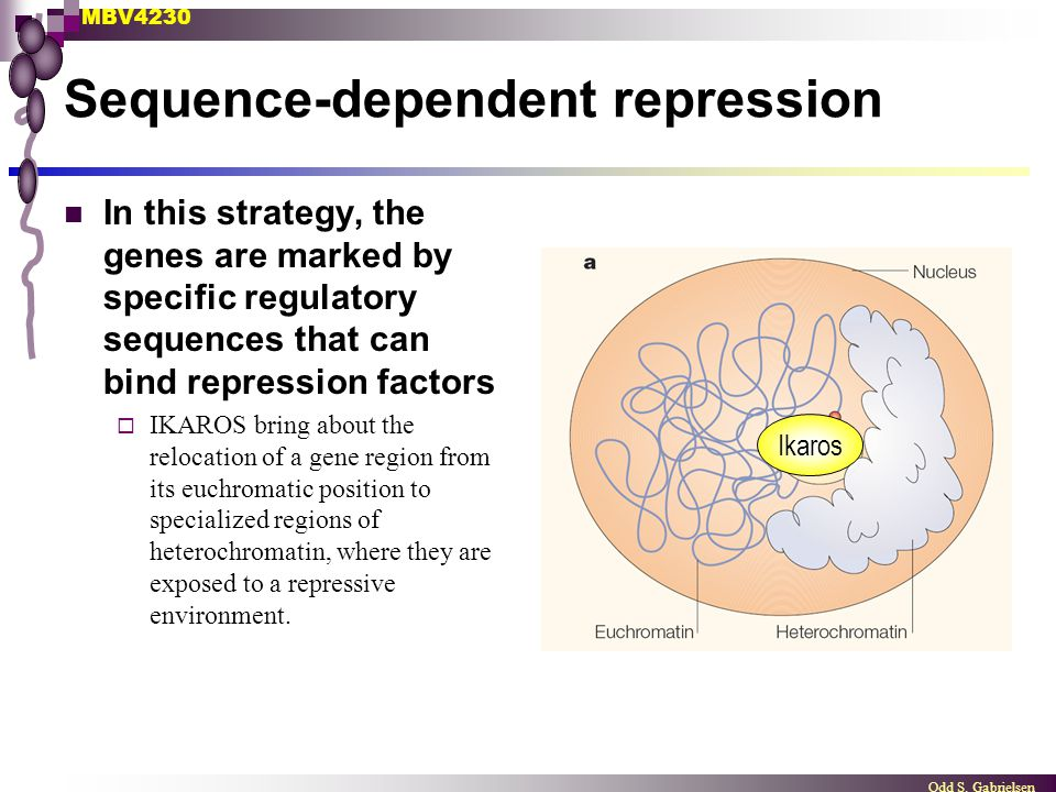 Sequence-dependent repression