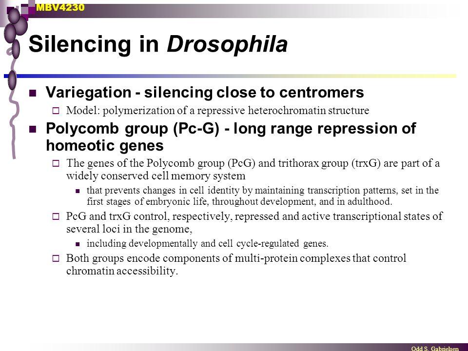 Silencing in Drosophila