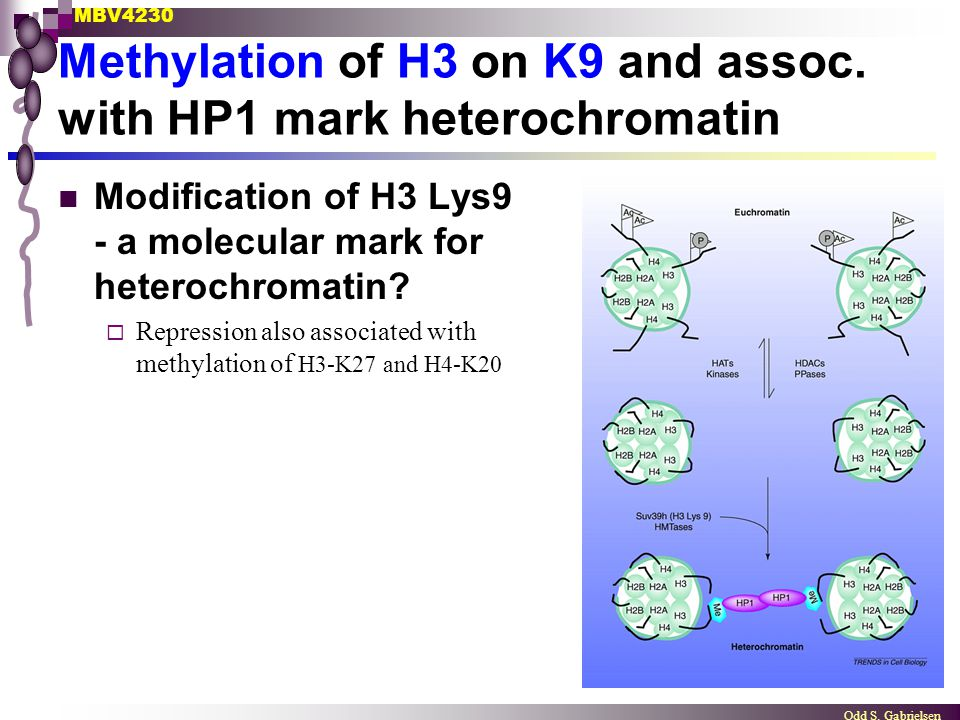 Methylation of H3 on K9 and assoc. with HP1 mark heterochromatin