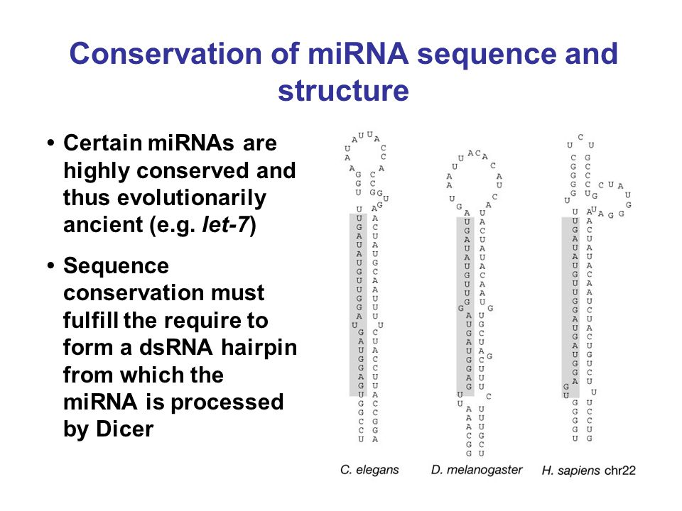 Conservation of miRNA sequence and structure