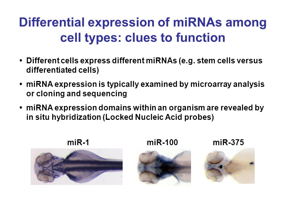 Differential expression of miRNAs among cell types: clues to function