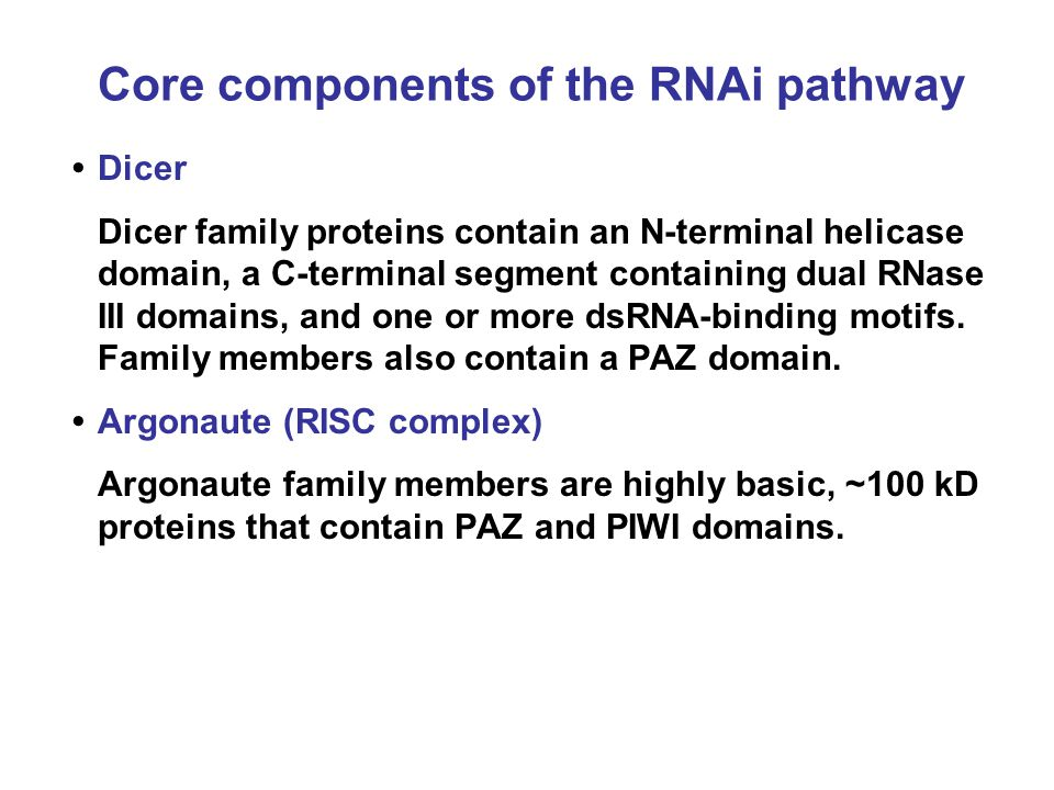 Core components of the RNAi pathway