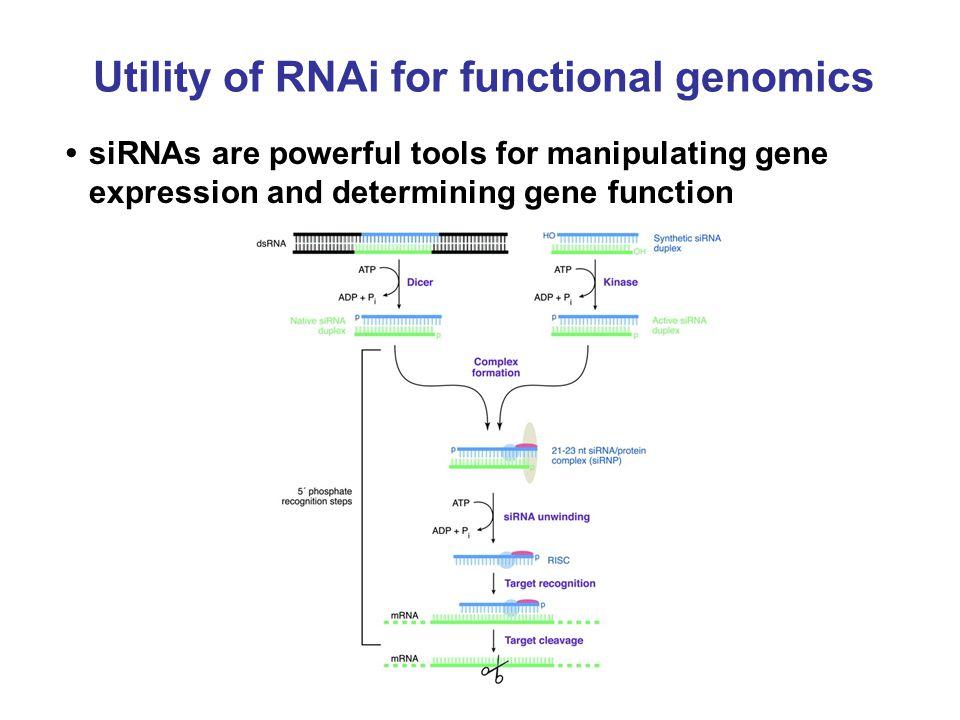Utility of RNAi for functional genomics