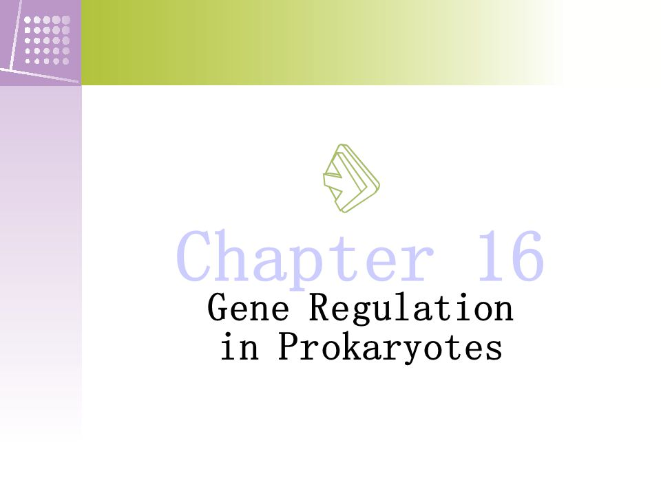 Gene Regulation in Prokaryotes