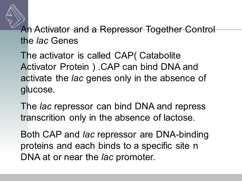 An Activator and a Repressor Together Control the lac Genes