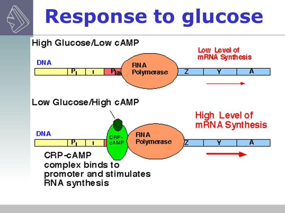 Response to glucose