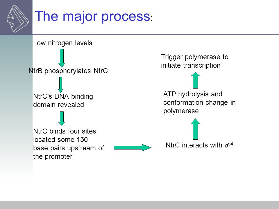 The major process: Low nitrogen levels