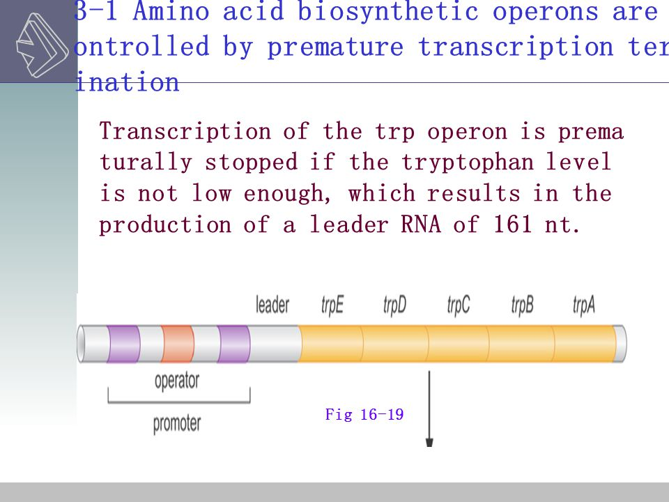 3-1 Amino acid biosynthetic operons are controlled by premature transcription termination