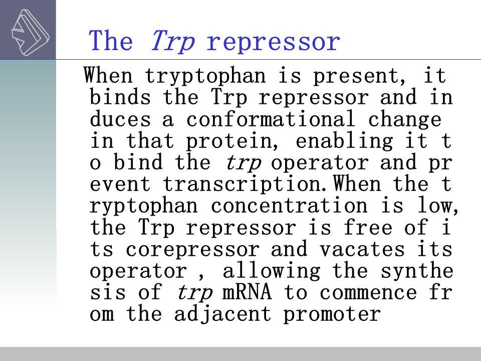 The Trp repressor