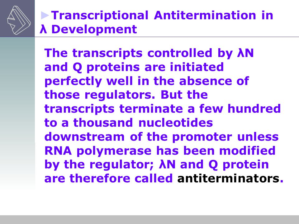 Transcriptional Antitermination in λ Development