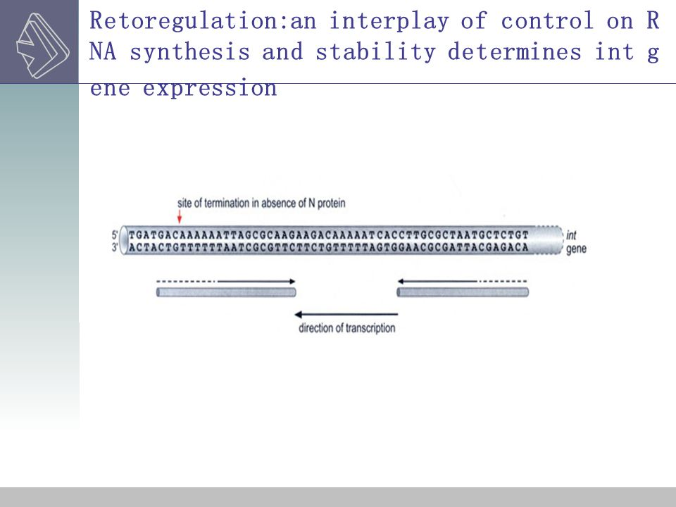 Retoregulation:an interplay of control on RNA synthesis and stability determines int gene expression