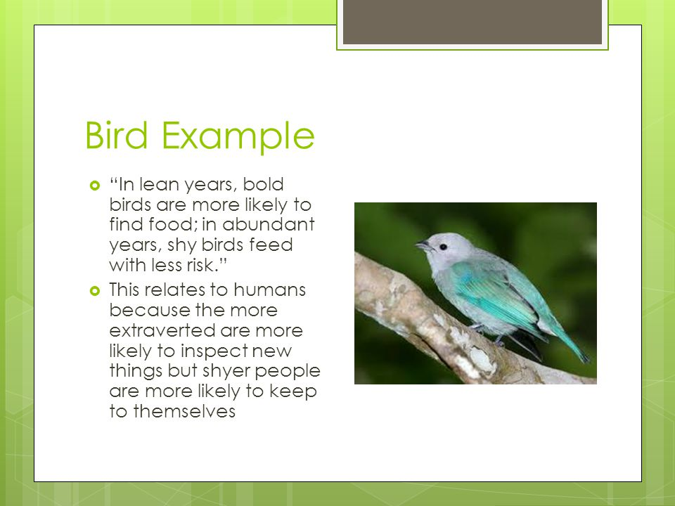 Bird Example In lean years, bold birds are more likely to find food; in abundant years, shy birds feed with less risk.