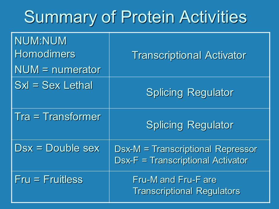 Summary of Protein Activities