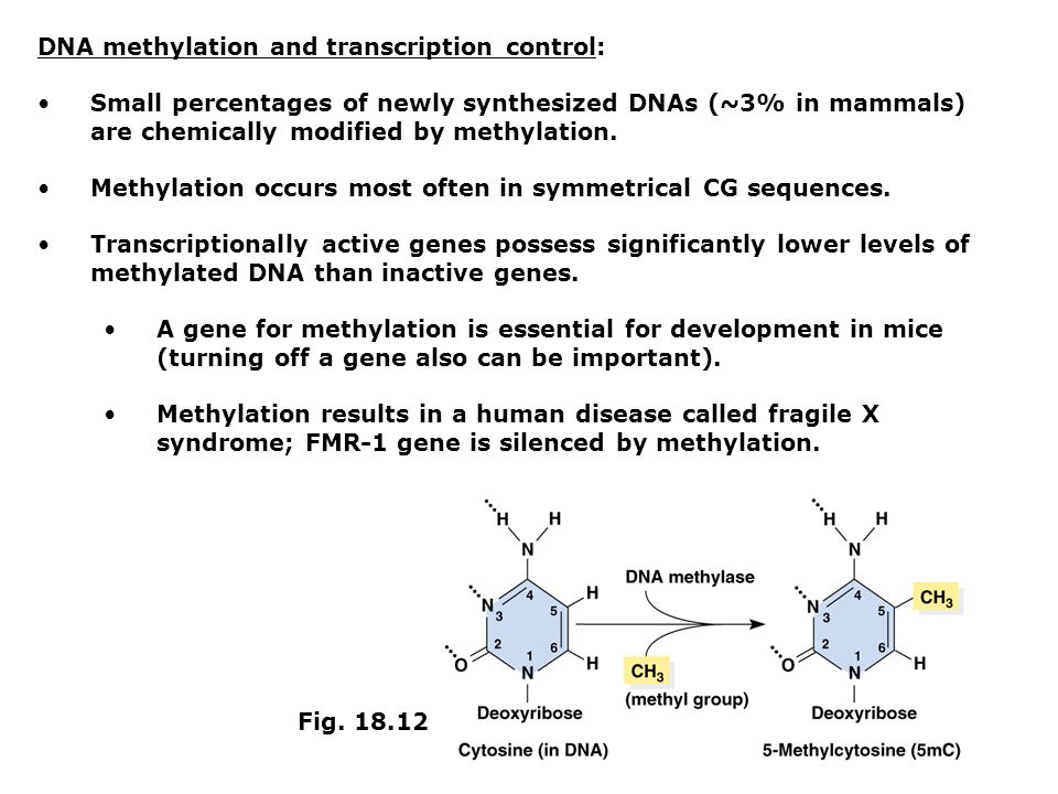 DNA methylation and transcription control:
