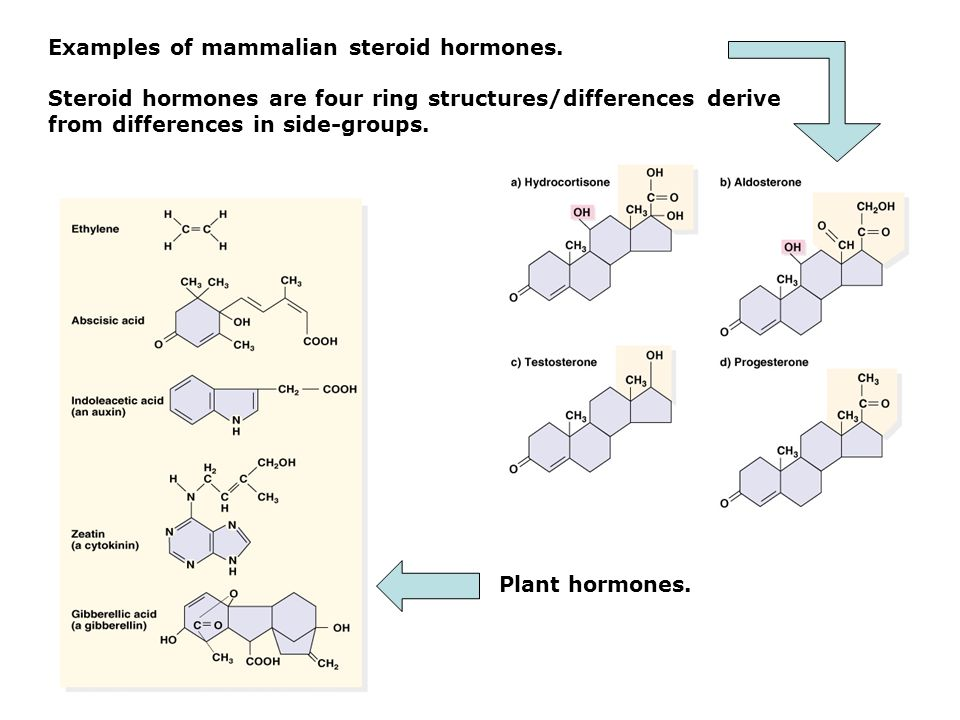 Examples of mammalian steroid hormones.