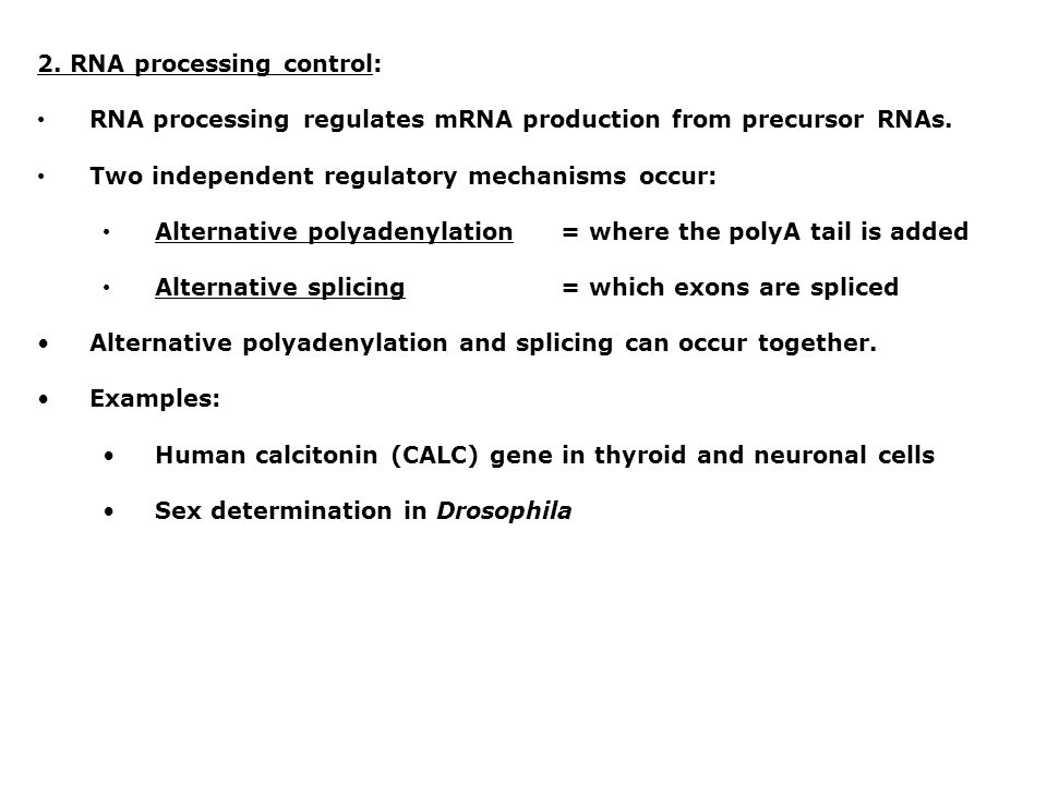 2. RNA processing control: