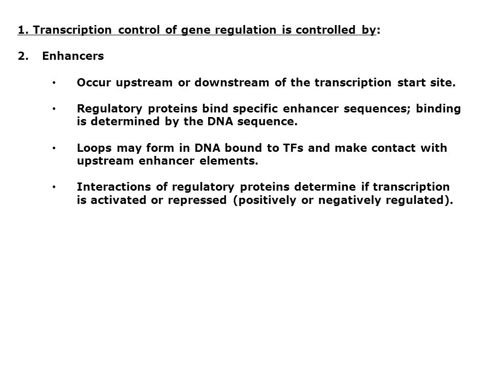 1. Transcription control of gene regulation is controlled by: