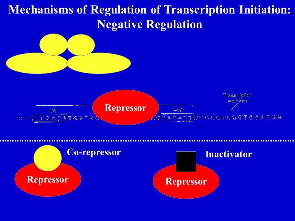 Mechanisms of Regulation of Transcription Initiation: