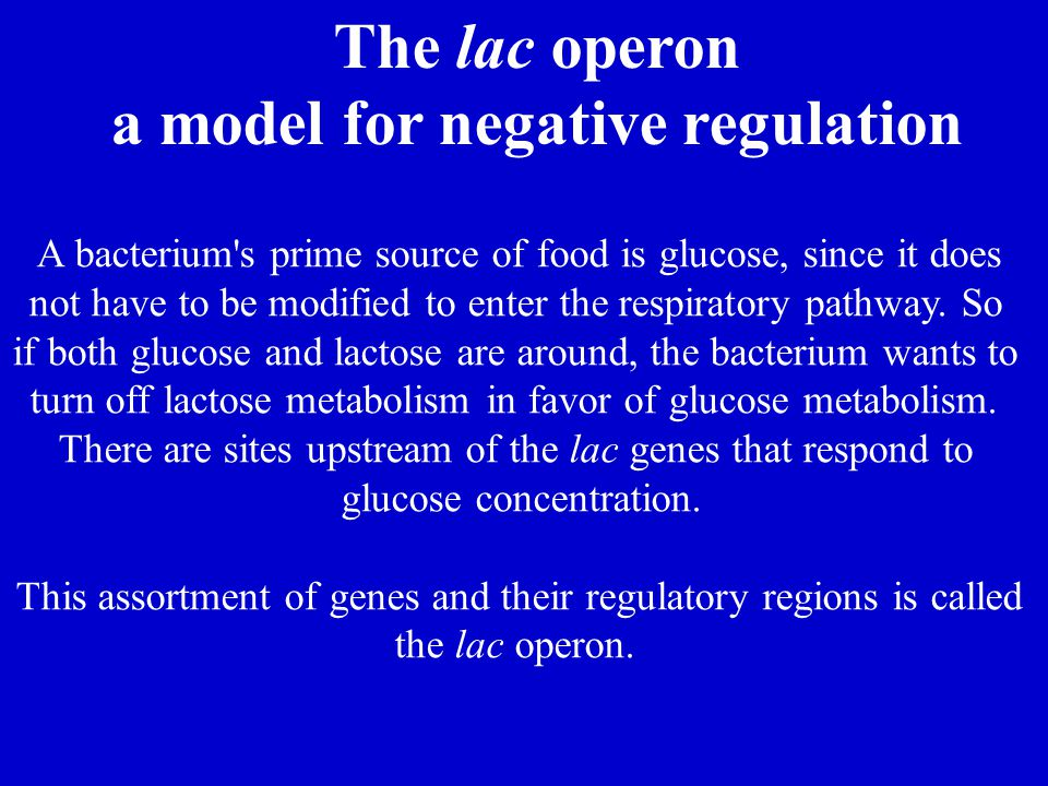 a model for negative regulation