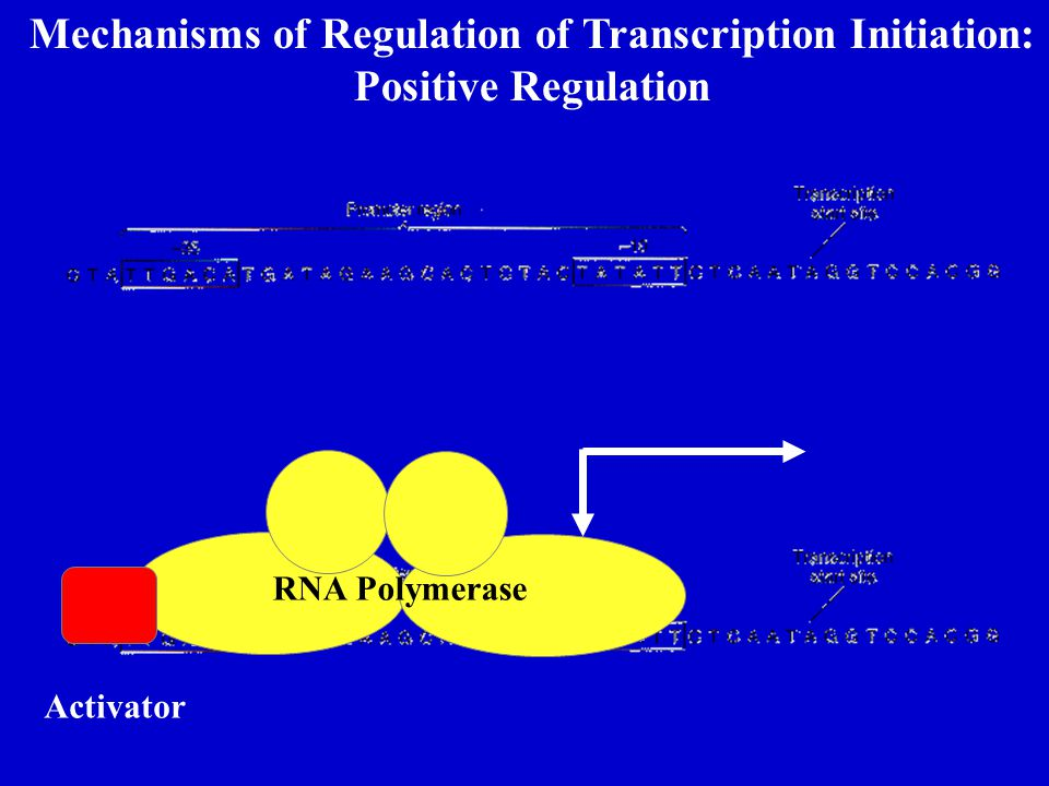 Mechanisms of Regulation of Transcription Initiation: