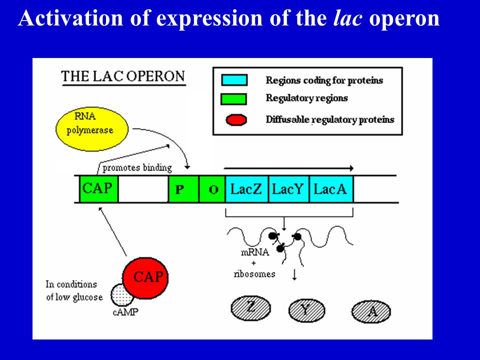 Activation of expression of the lac operon