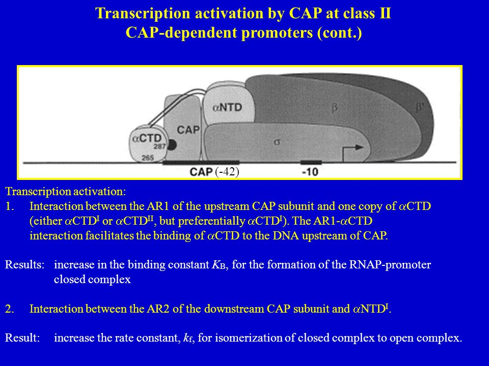 Transcription activation by CAP at class II