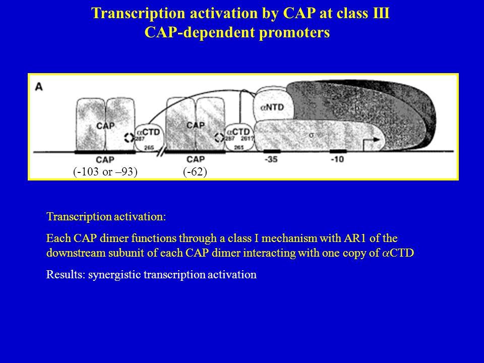 Transcription activation by CAP at class III CAP-dependent promoters