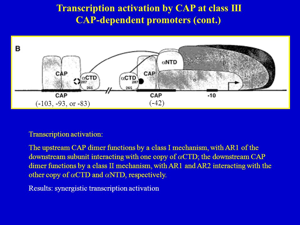 Transcription activation by CAP at class III