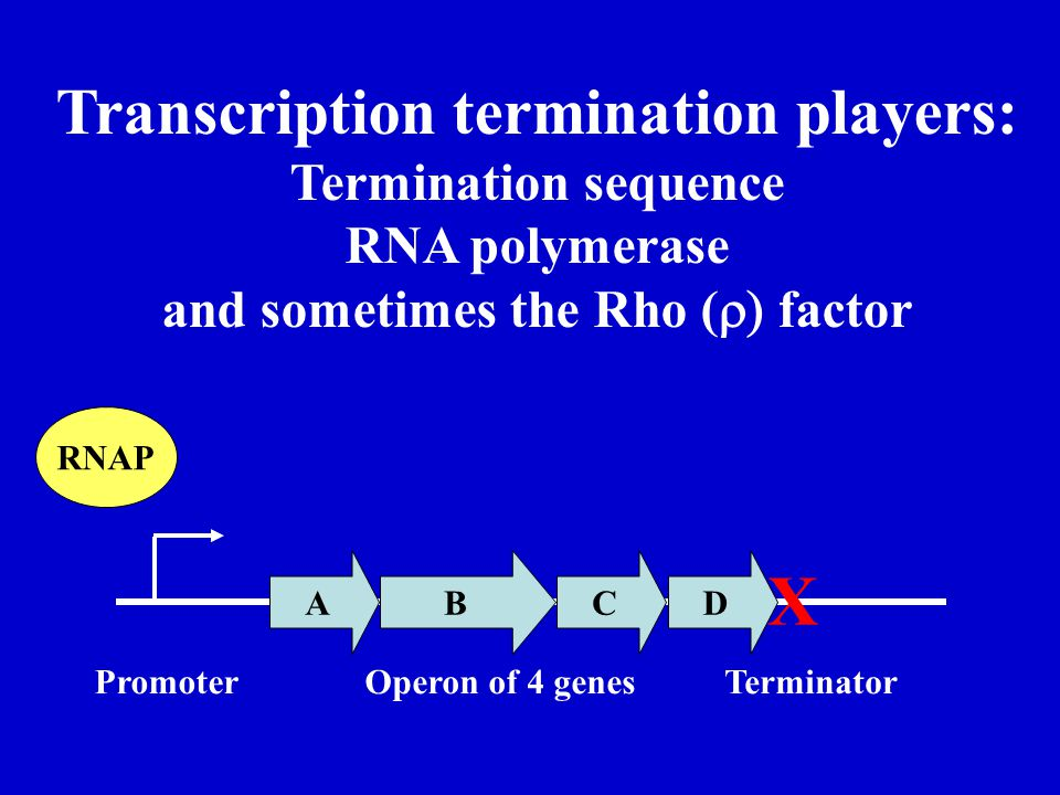 Transcription termination players: and sometimes the Rho (r) factor
