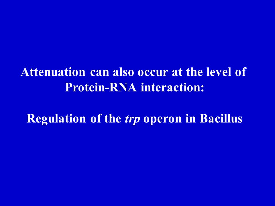 Attenuation can also occur at the level of Protein-RNA interaction: