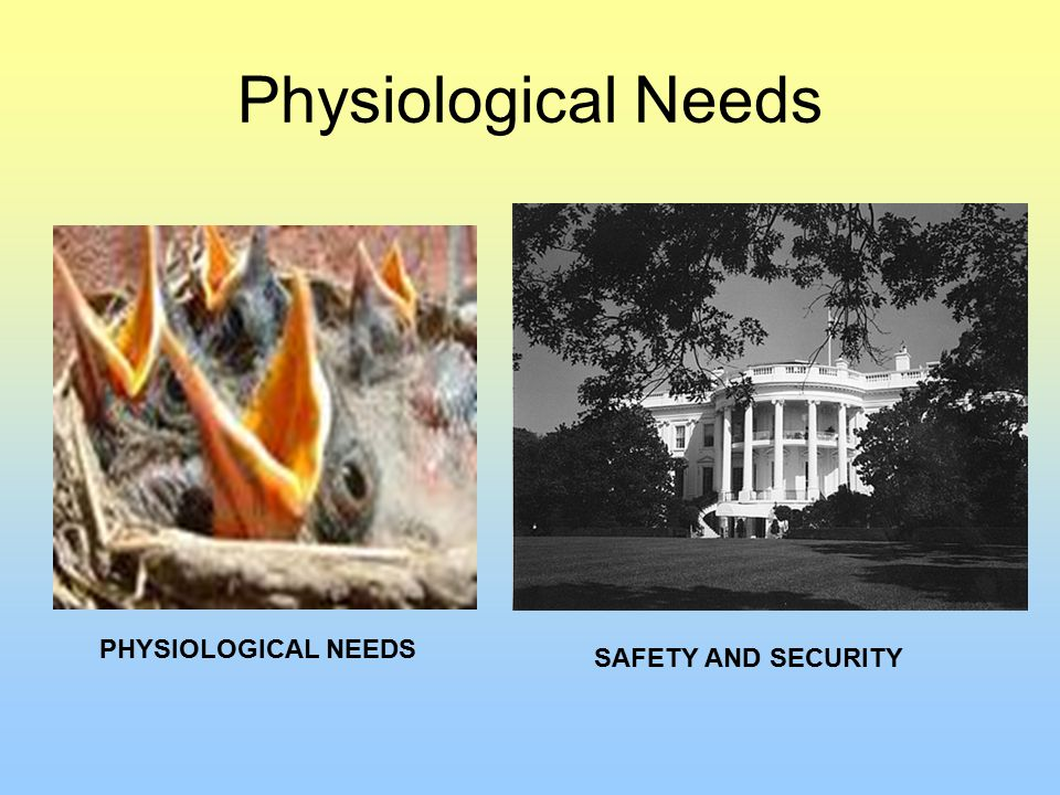 Physiological Needs PHYSIOLOGICAL NEEDS SAFETY AND SECURITY