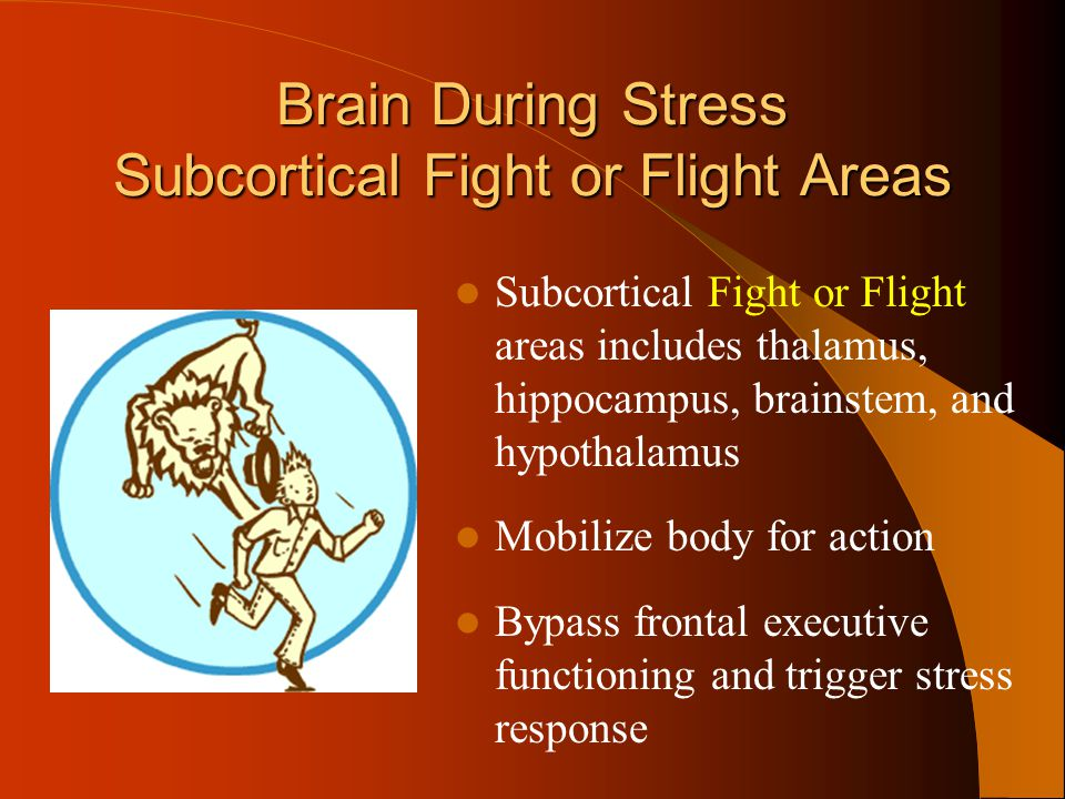 Brain During Stress Subcortical Fight or Flight Areas