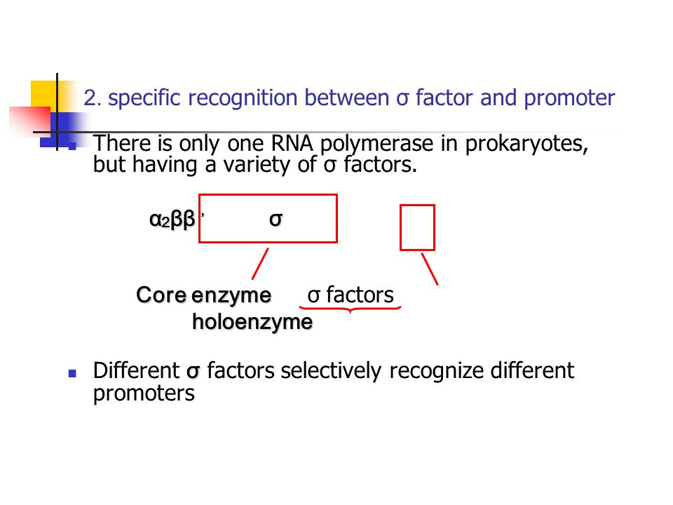 2. specific recognition between σ factor and promoter