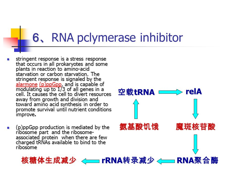 6、RNA pclymerase inhibitor