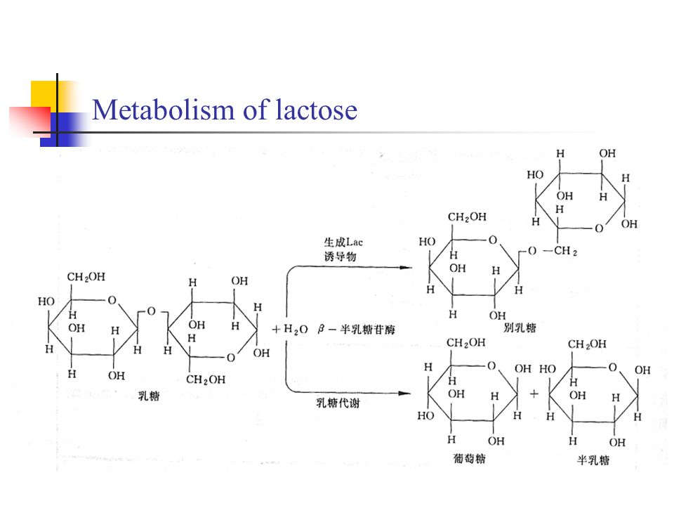 Metabolism of lactose