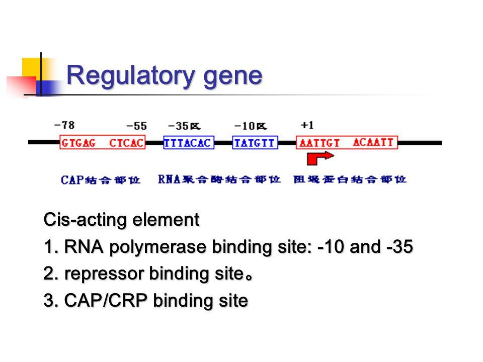 Regulatory gene Cis-acting element