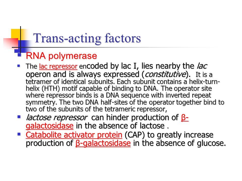 Trans-acting factors RNA polymerase