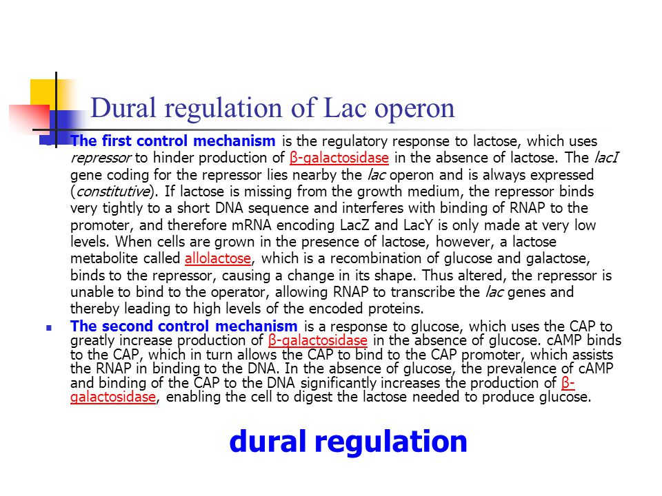 Dural regulation of Lac operon