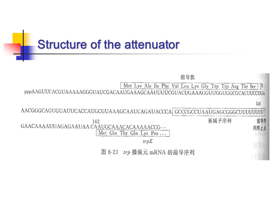 Structure of the attenuator