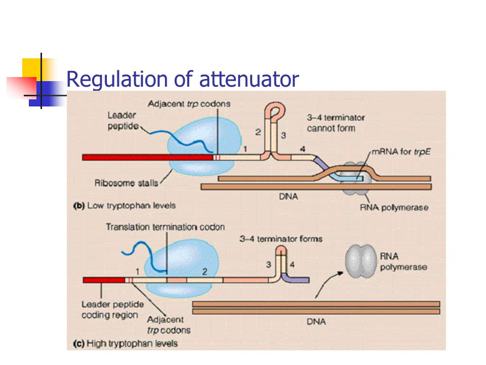 Regulation of attenuator